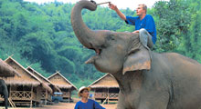 Elephant Owner for a day : Mahout Training at Pattara Elephant Farm Thumbnail Picture